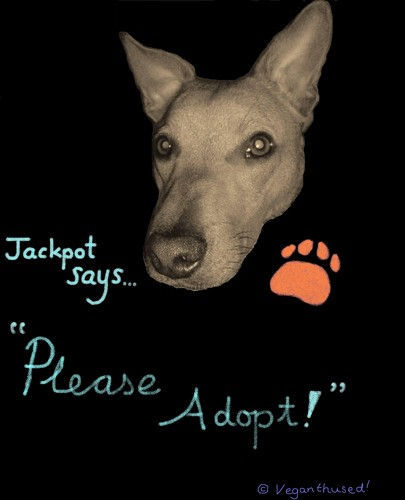 Jackpot_image_with_Puppy_Farm_message